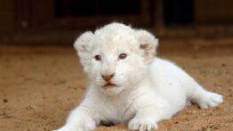 10 زیباترین حیوانات سفید در جهان را بشناسید!