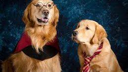 ببینید این سگ های گله چقدر هوای خانم هایشون را دارند