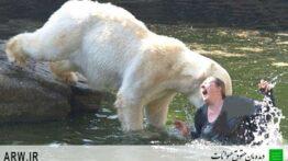 تلاش برخرس قطبی ای شکار انسان