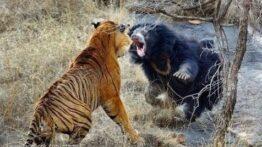 جنگ و جدال وحشیانه و حیرت انگیز حیوانات مرگبار (HD)! حیوانات وحشی مستند حیات وحش
