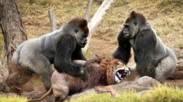 فیلم داغ از جنگ مرگبار حیوانات وحشی و درنده