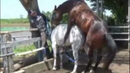 تزاوج الخيول والحمير tazawaj alkhuyul walhamir