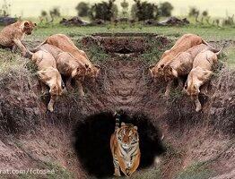 جنگ قوی ترین حیوانات وحشی