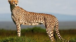 عجیب ترین و سریعترین حیوانات جهان در کل دنیا
