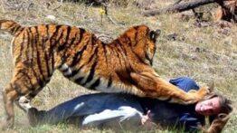 لحظات باور نکردنی حمله حیوانات وحشی