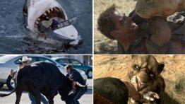 مجموعه کلیپ حمله حیوانات وحشی به خانه مردم