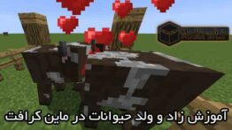 تدريب تزاوج الحيوانات (الماشية والأغنام) في Minecraft
