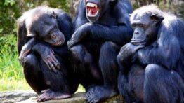 تزاوج القرد تزاوج الحيوانات