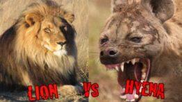 جنگ ترسناک حیوانات وحشی