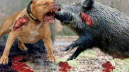 جنگ خونین و نبرد نفس گیر حیوانات وحشی