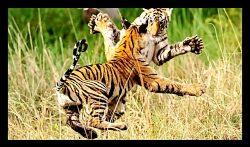 جنگ و جدال نفس گیر و خونین حیوانات وحشی برای بقاء!