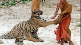 حمله حیوانات به انسان (5)
