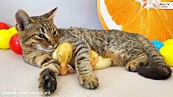 میدونستین گربهها از جنس فَنَرن؟