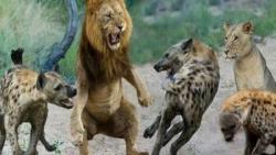 جنگ و نبرد حیوانات وحشی – شکار مرگبار
