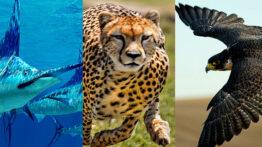 حیات وحش سریع ترین حیوانات دنیا