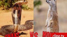 ده نبرد جذاب خونین حیوانات