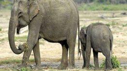 فیل قدرتمند مادر بین حیوانات – جنگ و نبرد خونین حیوانات