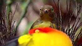 مستندی از جفت گیری غیر معمول حیوانات در طبیعت
