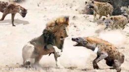 جنگ فوق وحشیانه حیوانات