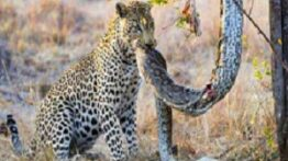 بهترین لحظات شکار حیوانات ازدست ندیید!!!
