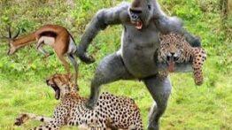جنگ و نبرد حیوانات وحشی بر سر شکار