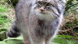 صحنه های از شکار شدن کوروکودیل توسط حیوانات وحشی