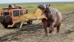 بهترین لحظه جنگ حیوانات برتر 2020 – کشف حیوانات وحشی