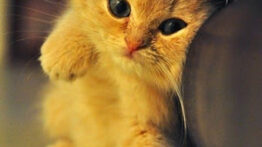 بچه گربه خوشگل