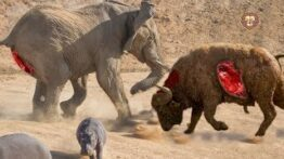 شکار وحشتناک و باور نکردنی و جنگ خونین حیوانات وحشی