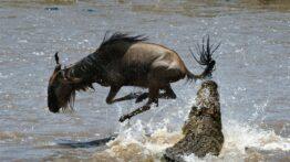 شکار وحشتناک و هیجان انگیز حیوانات وحشی