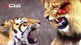 صحنه هایی زیبا از شکار کردن حیوانات وحشی