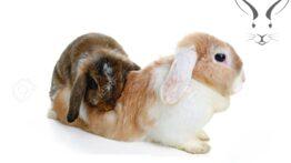باور نکردنی ترین جفت گیری خرگوش و گربه