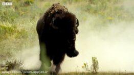 بهترین مبارزات جفتگیری بهترین نژاد حیوانات در یک ویدیو