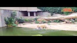 حمله حیوانات به پرندگان در باغ وحش