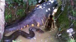 شکار مار سمی توسط حیوانات وحشی