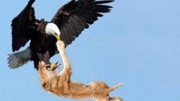 شکار مرگبار – شکار حیوانات درنده – حیات وحش