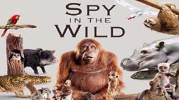 مستند جاسوسی در حیات وحش