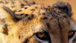 مستند حیات وحش حیوانات وحشی دوبله فارسی
