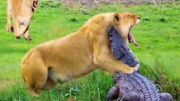 مستند حیوانات وحشی – شکار حیوانات