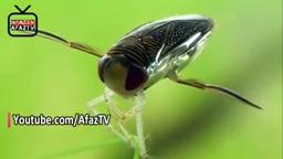 واقعیت های باورنکردنی درباره جفت گیری حیوانات ! AfazTV